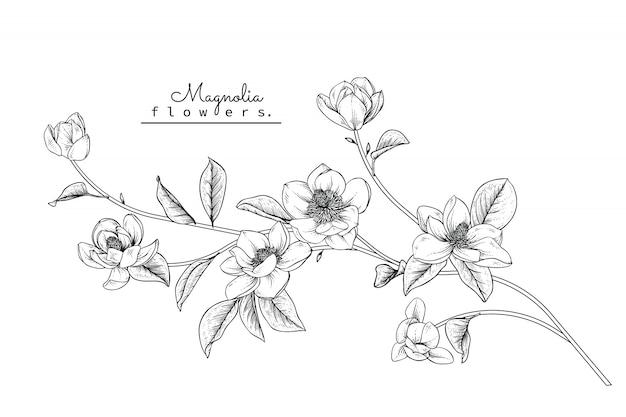Magnolia liść i rysunki kwiatowe