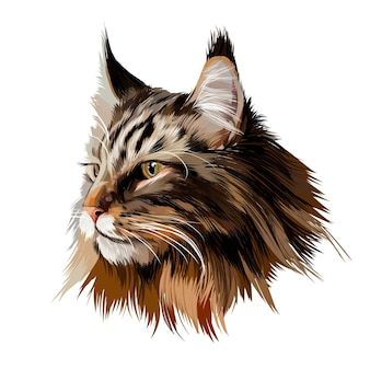 Maine coon portret twarzy z wielokolorowych farb kolorowy rysunek realistyczny kot