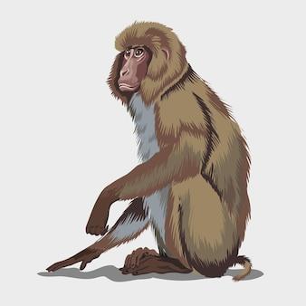Makak japoński lub brązowa małpa siedzi na ground.isolated na białym tle.