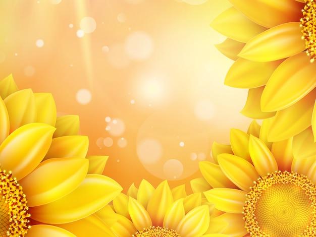 Makro słonecznik tło.