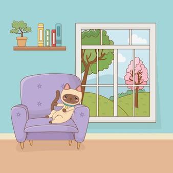 Mała kot maskotka w domowym pokoju