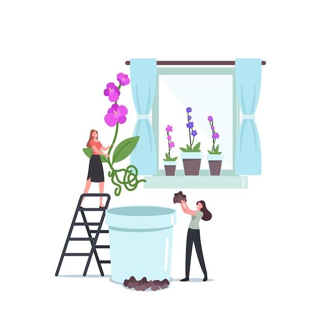 Małe postacie kobiece sadzenie ogromnych kwiatów orchidei phalaenopsis w doniczce. wnętrze domu z egzotycznymi kwiatami na parapecie. ludzie dbają o rośliny, ciesząc się hobby ogrodniczym. ilustracja kreskówka wektor