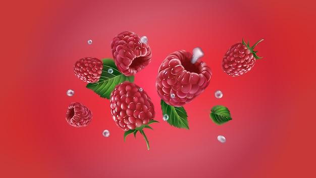 Malinowe jagody z liśćmi i kroplami wody rozrzucone są na czerwonym tle. realistyczna ilustracja.