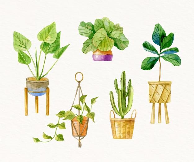 Malowana Akwarela Kolekcja Roślin Doniczkowych Darmowych Wektorów