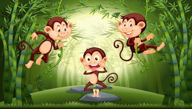 Małpa w lesie