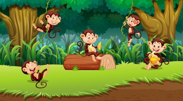 Małpa w scenie dżungli