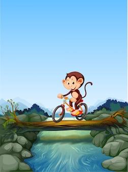 Małpi jeździecki rowerowy skrzyżowanie rzeki