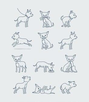 Mały pies chihuahua w różnych pozach