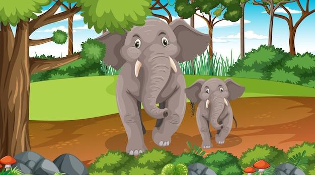 Mama i dziecko słonia w lesie lub lesie deszczowym z wieloma drzewami