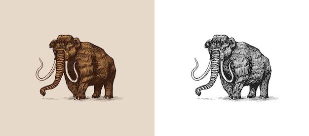 Mamuta lub wymarły słoń z pniami ssaków lub trąbowce duże zwierzę vintage retro znaki doodle