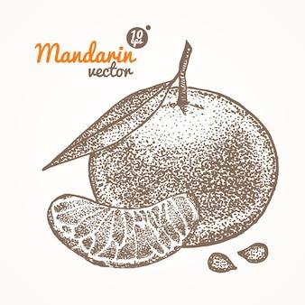 Mandarynka ręcznie rysować szkic.