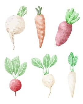 Marchew i buraki warzywne w stylu przypominającym akwarele.