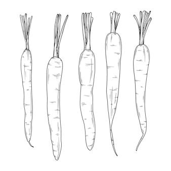 Marchewki na białym tle. ilustracja w stylu szkicu.