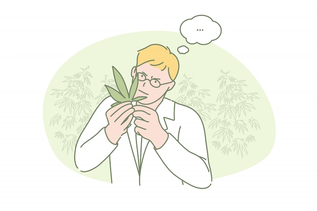Marihuana, badania, medycyna, nauka
