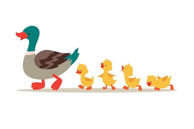 Matka kaczka i kaczątka. śliczne dziecko kaczki chodzi w rzędzie. ilustracja kreskówka