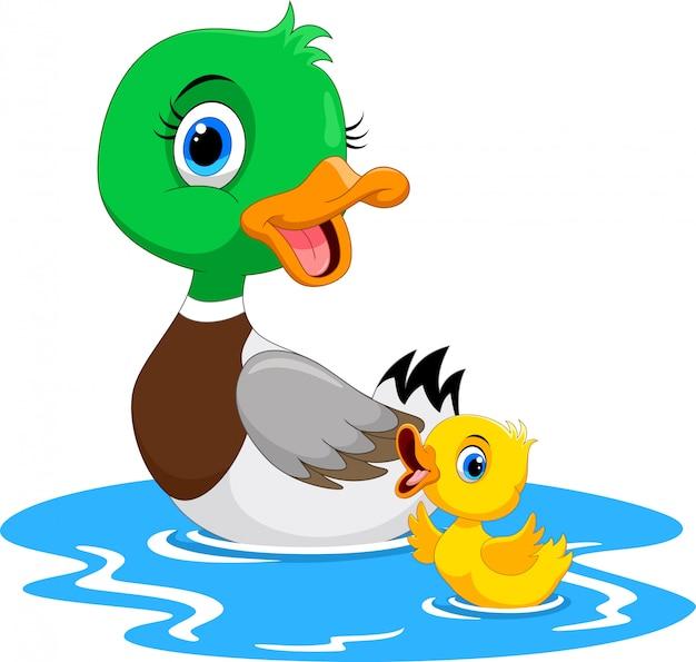 Matka kaczka pływa ze swoimi małymi uroczymi kaczątkami
