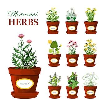 Medyczne zioła w doniczkach z etykietami