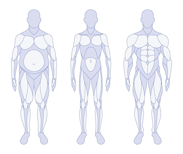 Męskie typy ciała anatomia przednia pozycja