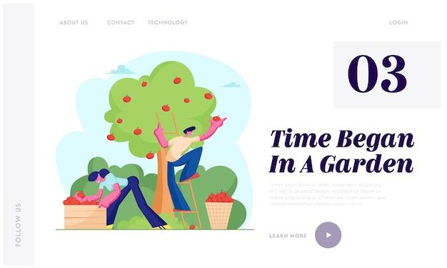 Mężczyzna i kobieta rolnicy zbierają zbiory jabłek. postacie zbierające dojrzałe owoce z drzewa w ogrodzie, ekologiczne zdrowe odżywianie. strona docelowa witryny, strona internetowa.