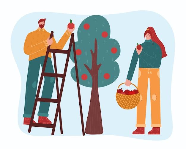 Mężczyzna i kobieta wybierają jabłka.