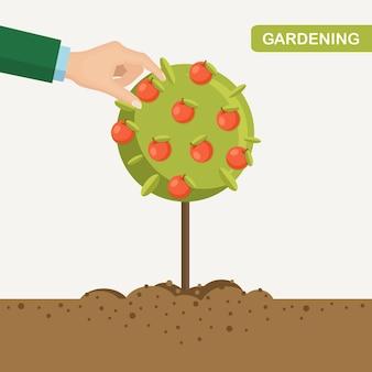 Mężczyzna zbiera jabłka w ogrodzie. ludzka ręka zbiera owoce z drzew. żniwa