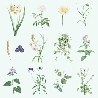 Mieszane kwiaty letnie