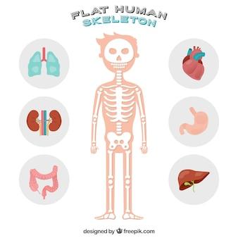 Miły ludzki szkielet