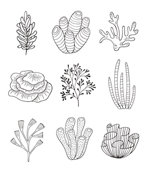 Minimalistyczne korale i algi. grafika liniowa wodorostów, roślin oceanicznych. botaniczne elementy podwodne