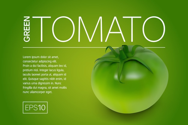 Minimalistyczny baner z realistycznym zielonym niedojrzałym pomidorem i jasnym żółto-zielonym tłem.