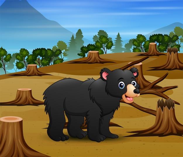Miodowy miś żyjący w jałowym lesie