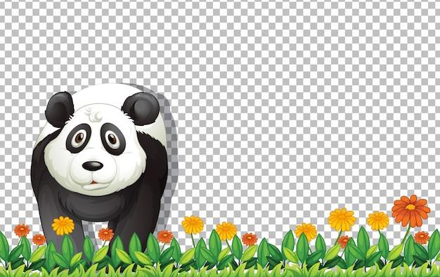 Miś panda stojący na zielonej trawie na przezroczystym tle