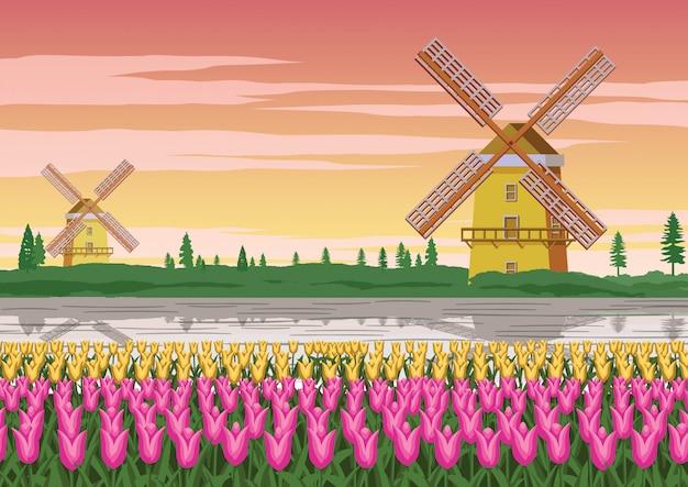 Młyn wiatrowy i ogród tulipanów, słynny symbol holandii
