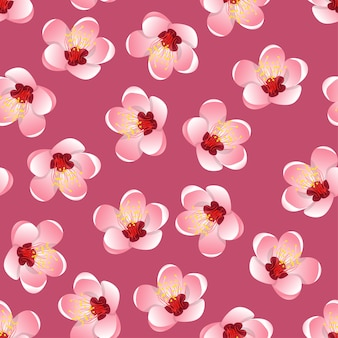 Momo peach flower blossom na różowym tle