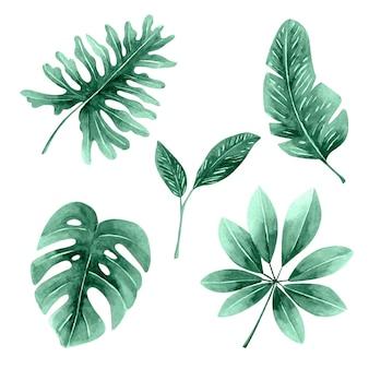 Monochromatyczne liście tropikalne