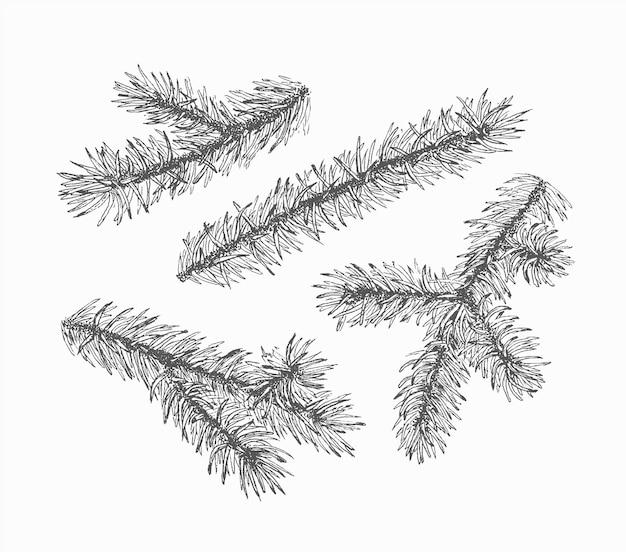 Monochromatyczne puste gałęzie jodły, zestaw ozdób na białym tle ręcznie rysowane choinki.