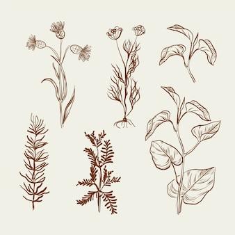 Monochromatyczny rysunek z ziołami i dzikimi kwiatami