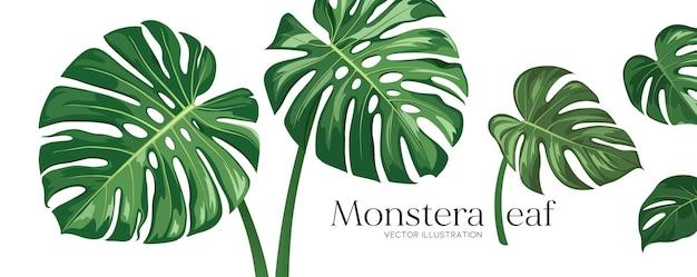 Monstera liść wektor realistyczny projekt kolekcje baner na białym tle