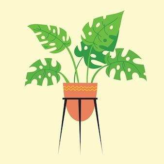 Monstera w doniczce na białym tle. roślina tropikalna do wystroju wnętrza domu lub biura. ilustracja wektorowa w stylu płaski