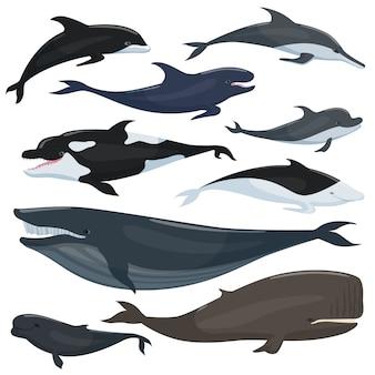 Morska kolekcja różnych podwodnych dużych ryb i zwierząt ssaków