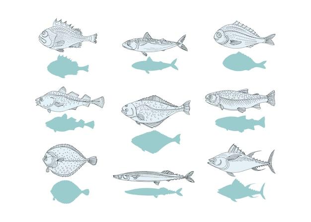 Morski zestaw vintage ryb. okoń, dorsz, makrela, flądra, saira, tuńczyk, dorado, halibut, pstrąg doodle szkic