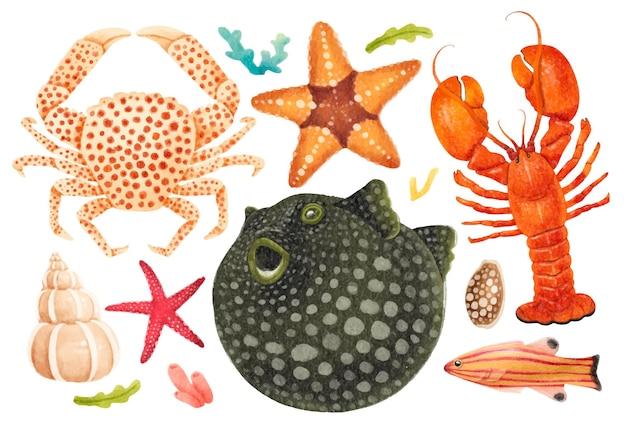Morskie stworzenia akwarele ręcznie malowane ilustracje