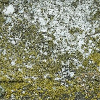Moss tekstury