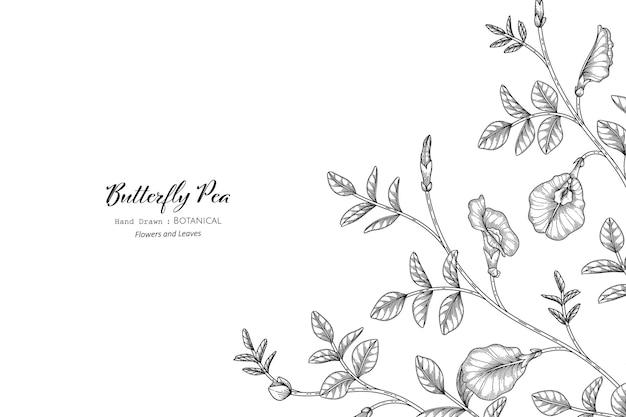 Motyl groszek kwiat i liść ręcznie rysowane ilustracja botaniczna z grafiką.