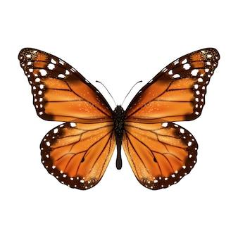 Motyl realistyczny na białym tle