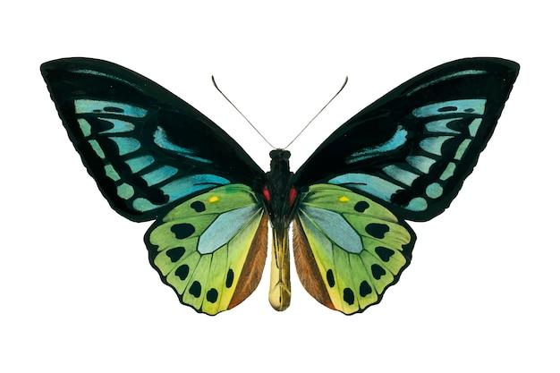 Motyl Darmowych Wektorów