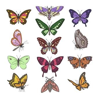 Motyli wektorowy kolorowy insekta latanie dla dekoraci i piękni motyli skrzydła latają ilustracyjnego naturalnego wystrój ustawiają odosobnionego na białym tle
