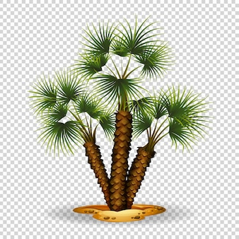 Motyw ogrodniczy z palmą