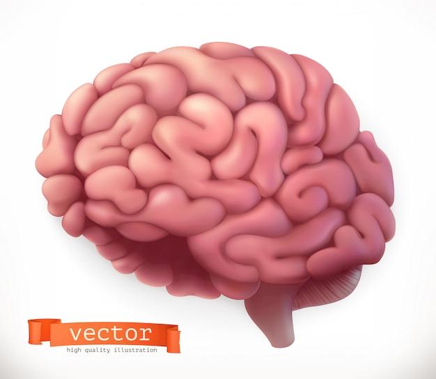 Mózg. ikona 3d