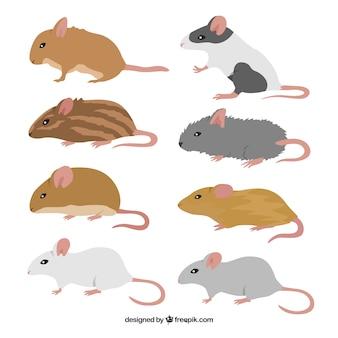 Myszy hodują paczkę ośmiu