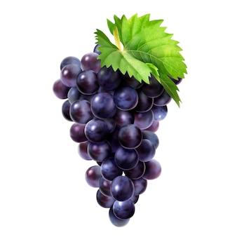 Na białym tle ciemne winogrona z zielonym liściem